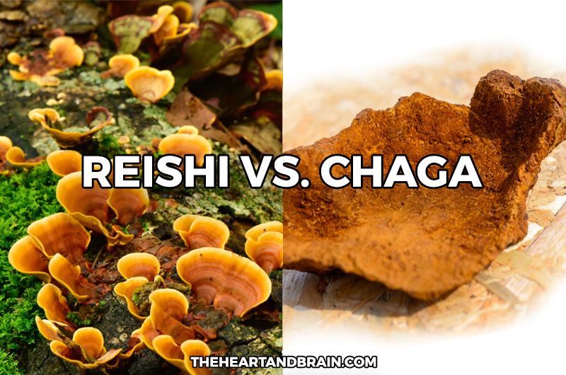 Reishi Mushroom vs. Chaga