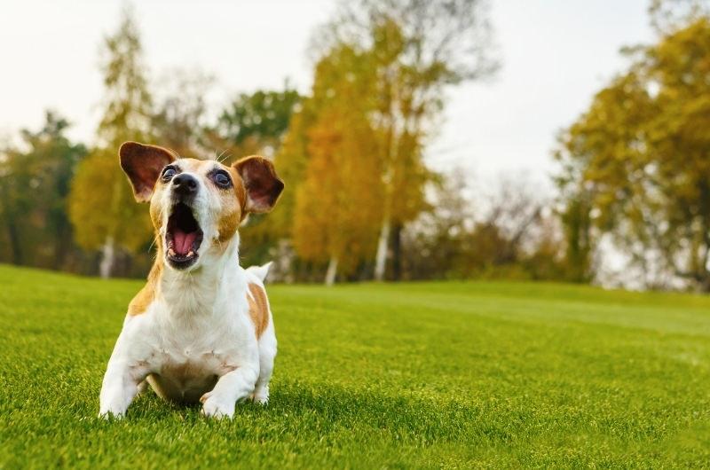 Can A Dog Barking Damage Hearing?